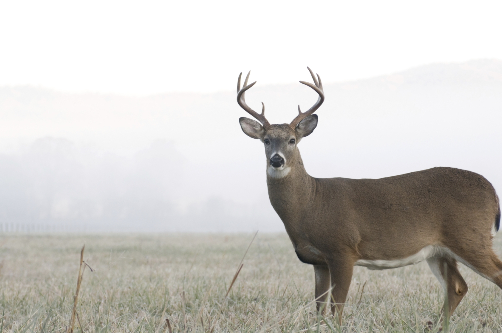 Home | Premier Hunting Leases